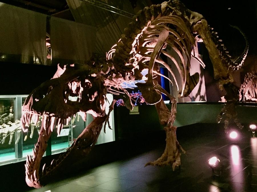 Esqueleto de Tiranosaurio del museo paleontológico de Dinópolis Teruel